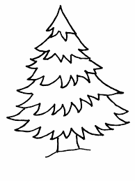evergreen tree outline kids coloring