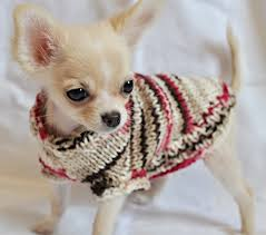 so adorable sweater for sale on etsy puppies are from