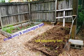 Strawberry Garden Beds One Raised Bed Is Planted A Cultivated Nest