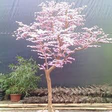 10 pcs japanese cherry blossoms seeds courtyard garden bonsai