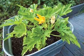 container vegetable gardening 101 farm and garden grit magazine