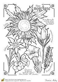 Dessin à colorier sur la flore de la montagne  Hugolescargotcom