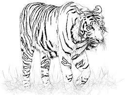 tiger kids coloring pages free printable coloring pictures kids