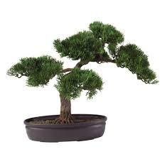 amazon com bonsai live indoor plants grocery u0026 gourmet food