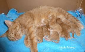newborn the kitten kaboodle