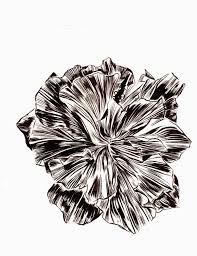 mc drawn hibiscus sketches brush and ink
