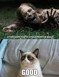 Angry Cat Memes - 7 angry cat memes very funny 2013 funny lytum