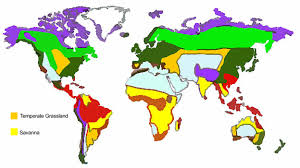 World Map Biomes by Untitled Document