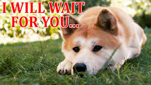 What Breed Is Doge Meme - hachiko a dog s story movie trailer film music video statue