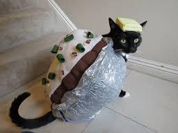 Halloween Costumes Cats Friend Creates Homemade Halloween Costumes Cat