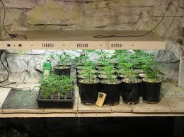 Grow Lights For Plants Grow Lights For Marijuana Growing Organic Marijuana Growing