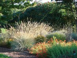 fingernails caring for ornamental grasses home and garden