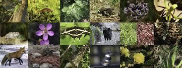 native north carolina plants plant animal life