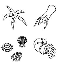 deep sea animals and free shells coloring page download u0026 print