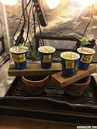 Fiber Soil by Sagalong With Amare Se250 Led U0026 Gorrila Tent Soil In Fiber Pots