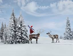the christmas wish book anja hanging ornaments the christmas wish