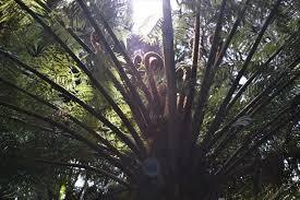Kia Kora Tb3n6p4 Travel Bug Tag Kia Ora Tree Fern
