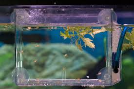 all aquarium info where to buy garra rufa doctor fish and