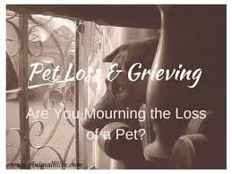 grieving loss of pet pet loss and grieving are you mourning a pet companion animal bliss