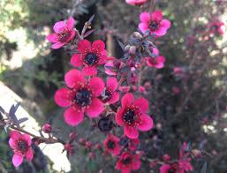 australian native plants nursery poyntons nursery and garden centre plants natives