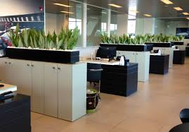 a plant service that says no to boring office plants