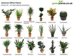 good inside plants oxygen good for indoor plants