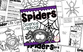 spider science for little learners mrs jones u0027 creation station