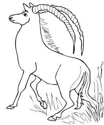 sable antelope africa coloring animal coloring pages