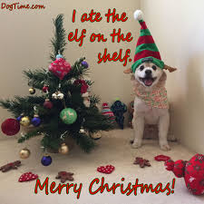 dog christmas cards 30 dog christmas cards you can with your friends and family
