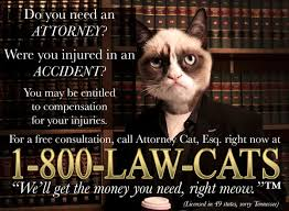 Lawyer Cat Meme - need an attorney call 1 800 law cats imgur