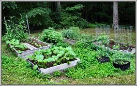 cocozelle di napoli squash serendipity life is a garden