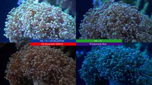 led aquarium lights for reef tanks led vs t5 vs hqi light reef tank story youtube