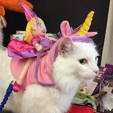 Goat Halloween Costume Cat Diy Halloween Costumes Brit