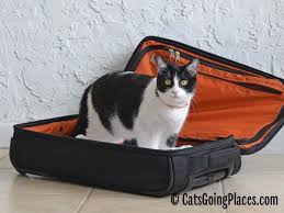 traveling with cats images Printable packing list for cat travel cats going places jpg