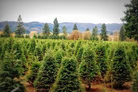 the farmer u0027s wife 2013 u cut christmas trees