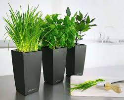 indoor flower pot 90 enchanting ideas with comely plant pots
