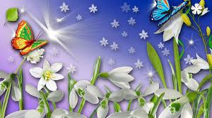 flowers butterflies flowers light blooms snow snowdrops spring