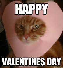 Funny Happy Valentines Day Memes - 20 funny valentine s day memes for singles sayingimages com