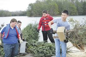 go christmas tree students sink trees to bottom of lake to help