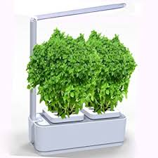 indoor planting amazon com soil free smart herb garden hydroponics indoor plant