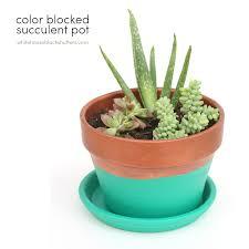 Cute Succulent Pots Color Blocked Succulent Pot White House Black Shutters