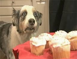 resume templates janitorial supervisor meme dog funny memes clean 13 best social media marketing meme images on pinterest funny