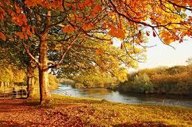 fall foliage min jpg