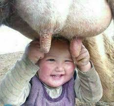 Laughing Baby Meme - laughing baby milking imgur