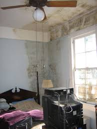 black mold removal and prevention