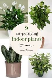 Air Purifying Plants 9 Air by The Best Plants For Every Room Of The House Plants Lights And House