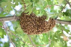 rockland honey bee removal