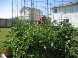 how to make a trellis for cucumbers growing vertical u2013how to support your plants u2013 my square foot garden