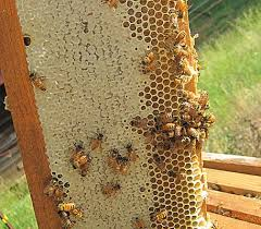 Raising Bees In Backyard by 124 Best Buzz Buzz Just Because Images On Pinterest Bee Keeping