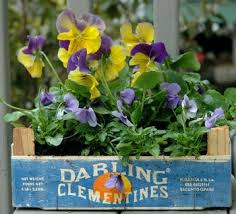 Patio Plants For Sun Top 7 Flowering Container Garden Plants For Sunny Spots